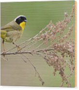 Yellowthroat Warbler Wood Print