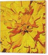 Yelow Tulip Wood Print