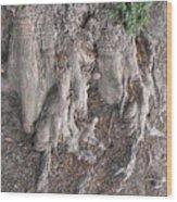 Yew Tree Roots Wood Print