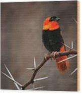 Yikes Spikes - Red Bishop Weaver Bird Wood Print