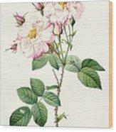 York And Lancaster Rose Wood Print