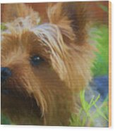 Yorkie In The Grass - Painting Wood Print