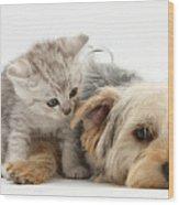 Yorkshire Terrier And Tabby Kitten Wood Print