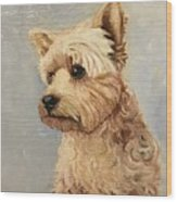 Yorkshire Terrier Wood Print