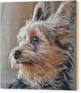 Yorkshire Terrier Dog Pose #2 Wood Print