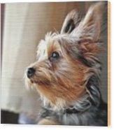 Yorkshire Terrier Dog Pose #5 Wood Print