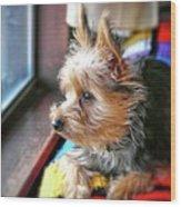 Yorkshire Terrier Dog Pose #8 Wood Print