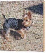 Yorkshire Terrier Dog Pose #9 Wood Print