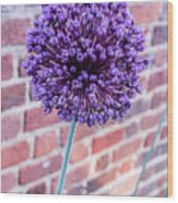 Yorktown Onion Bloom Wood Print