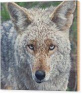 Yosemite # 4  Wood Print