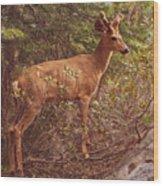 Yosemite #2, Detail Wood Print