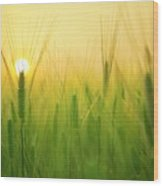 You'll Remember Me When The West Wind Moves Upon The Fields Of Barley Wood Print