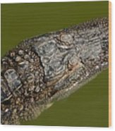 Young Alligator With Textured Skin Wood Print