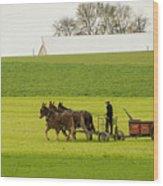 Young Amish Farmer Wood Print