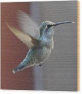 Young Anna's Hummingbird In Flight Wood Print