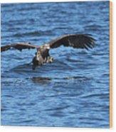 Young Bald Eagle I Wood Print