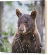 Young Black Bear Wood Print