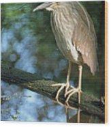 Young Black Crowned Night Heron Wood Print