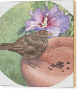 Young Blackbird After Raisins Wood Print