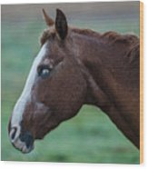Young Blind Horse In The Rain Wood Print