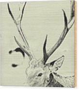 Young Buck Wood Print