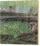 Young Buck Watching Eagle Wood Print