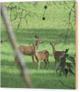 Young Buck With Two Does In The Meadow Wood Print