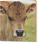 Young Calf In A Pasture Wood Print