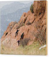 Young Climber In Red Rock Canyon Wood Print