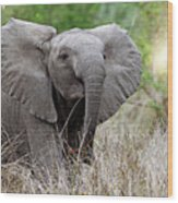 Young Elephant In The Light, Africa Wildlife Wood Print