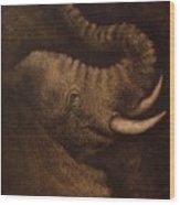 Young Elephant Portrait Wood Print