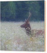 Young Elk In The Smokies. Wood Print