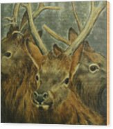 Young Elk Trio- Wapiti Wood Print
