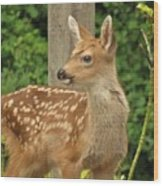 Young Fawn Wood Print