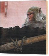 Young Female Asian Monkey Sitting On The Roof Wood Print