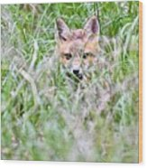 Young Fox Kit Hiding In Tall Grass Wood Print