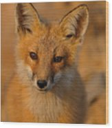 Young Fox Wood Print