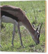 Young Gazelle Wood Print