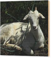 Young Goat Next To A Bush Wood Print