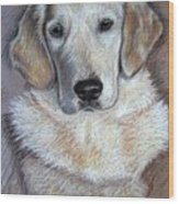 Young Golden Retriever Wood Print