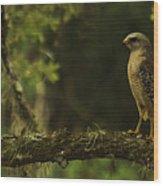 Young Hawk Wood Print