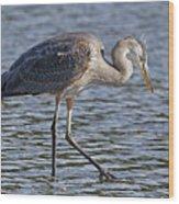 Young Heron Wood Print