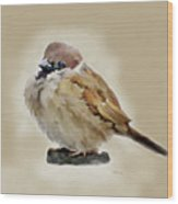 Young House Sparrow Wood Print