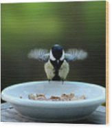 Young Hungry Tit Wood Print