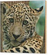 Young Jaguar Wood Print by Sandy Keeton