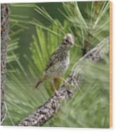 Young Lark Sparrow 3 Wood Print