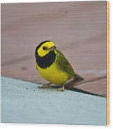 Young Male Hooded Warbler 2 Wood Print