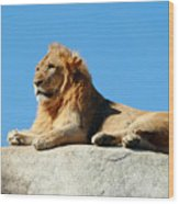Young Male Lion Reclining On A Rock Wood Print