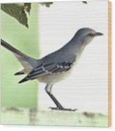 Young Northern Mockingbird Wood Print