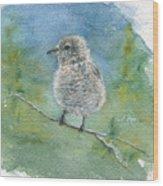 Young Northern Shrike Wood Print